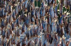 plażowe osuszki stojaka sardynki Fotografia Stock