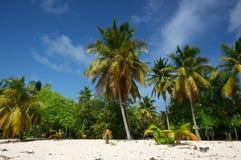 plażowe palmy Zdjęcie Royalty Free