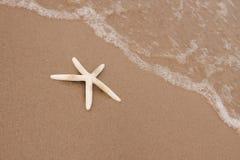 plażowe skorupy Zdjęcie Stock