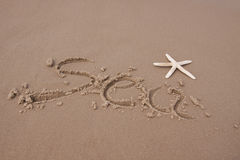 plażowe skorupy Obraz Royalty Free