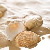 plażowe skorupy Obrazy Royalty Free