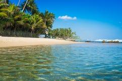 plażowego pary psa pierwszoplanowy lanka patrzeje sri tropikalny odprowadzenie zdjęcia royalty free