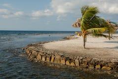 plażowi drzewka palmowe Zdjęcia Royalty Free