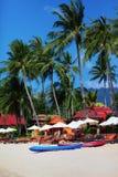 plażowi drzewka palmowe Obraz Stock
