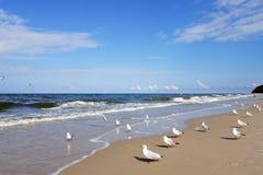 plażowi frajery Obraz Royalty Free