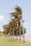 plażowi kokosowe escondida dominican lokalizacji playa republiki drzewa Obraz Stock