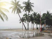 plażowi kokosowe escondida dominican lokalizacji playa republiki drzewa Zdjęcie Royalty Free