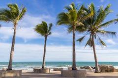 plażowi kokosowe escondida dominican lokalizacji playa republiki drzewa Fotografia Stock