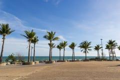 plażowi kokosowe escondida dominican lokalizacji playa republiki drzewa Zdjęcia Stock