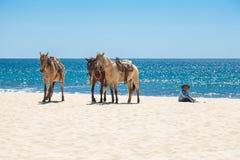 plażowi konie trzy Zdjęcie Stock
