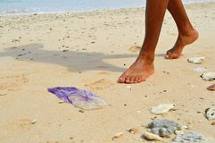 plażowi meduz Fotografia Stock