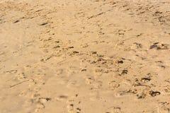 plażowi odciski stóp Zdjęcie Stock