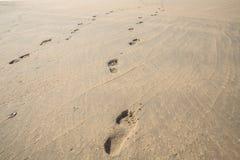 plażowi odciski stóp zdjęcie royalty free