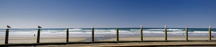 plażowi seagulls Zdjęcie Royalty Free