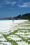 plażowi Seychelles Fotografia Stock