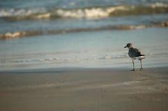 plażowy czesanie Obrazy Stock