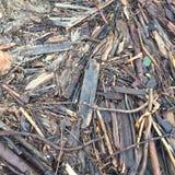 Plażowy drewno Zdjęcie Stock