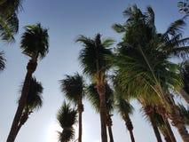 Plażowy drzewo Zdjęcie Stock