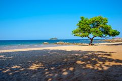 Plażowy drzewo Zdjęcia Royalty Free
