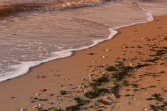 plażowy dziki Zdjęcia Stock