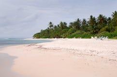plażowy egzot Zdjęcie Royalty Free