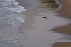 plażowy goa ind vagator Zdjęcia Royalty Free