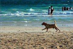plażowy harmonijny Obraz Royalty Free