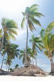 plażowy karaibski dziki Zdjęcia Royalty Free