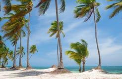 plażowy karaibski dziki Zdjęcie Stock