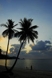plażowy kokosowej palmy piasek Obraz Royalty Free