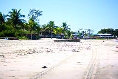 plażowy os mopsa biel Fotografia Stock