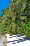 plażowy palmowy tropikalny Obraz Royalty Free