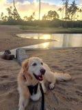 plażowy pies Fotografia Royalty Free