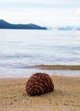 Plażowy Pinecone Zdjęcie Royalty Free