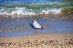 plażowy ptak Obrazy Stock