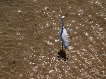 plażowy ptasi morze Fotografia Stock