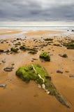 plażowy skalisty Zdjęcia Royalty Free