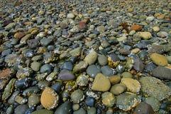 plażowy skalisty Obraz Royalty Free