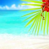 plażowy tropikalny Zdjęcia Royalty Free
