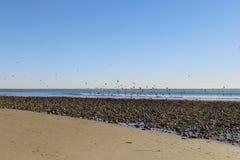 Plażowy Ventura CA Zdjęcia Royalty Free