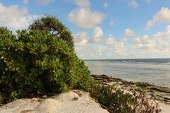 Plażowy widok Obraz Stock