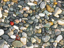 plaża pebbled Fotografia Stock