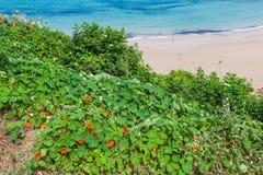 Plaża Pechon, Cantabria, Hiszpania Zdjęcie Royalty Free