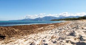 Plaża Saleccia fotografia stock