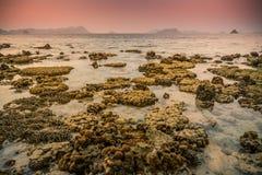 Plaża staghorn korale Fotografia Royalty Free