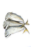 Pla Tuu , Thai mackerel Royalty Free Stock Images
