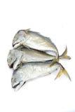 Pla Tuu, thailändsk mackerel Royaltyfria Bilder