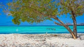 Plaża w Karaiby z drzewem Obraz Stock