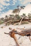 Plaża z drzewem fotografia stock
