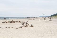 Plaża z konarami Fotografia Royalty Free